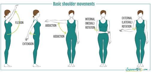 basic shoulder movements